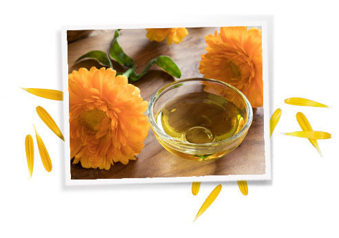 What are the Common Uses of Calendula?